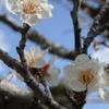 春の房総を歩く〜2.大福山の花と地衣類