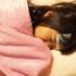 【2歳児育児の日常】やっぱり!不安が的中!娘が予防接種前にインフルエンザに!…しかもタミフルドライシロップが苦すぎて飲めません!