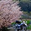 セロー、タイヤ交換・IRC GP-210と桜