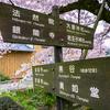 桜の季節、京都『東寺』『哲学の道』も綺麗でしょうね。