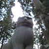 新潟県長岡市にある猫の神社に行ってきた! 南部神社 別名猫又権現 狛猫をじっくり観察! 動画有