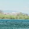 「桜満開やでっ!」ひでさん、ひっさんの2020.4/4九頭竜川サクラマス