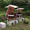 巣箱の固定とかスズメバチ退治とか