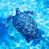 沖縄旅行に行ってきました。(2日目:青の洞窟ダイビング~美ら海水族館)