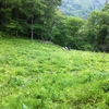10年間を振り返る①2008年:山奥の開墾に挑戦してみた