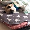 犬の寝る場所いろいろ