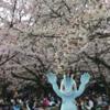 【ポケモンGO】代々木公園でワンリキーとお花見してきました!