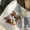 種まき祭りとトイレットペーパー問題 ☆ コロナウイルス対策・免疫力を上げる‼️