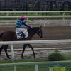中山ダ1200m(2歳戦)種牡馬別ランキング