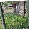 廃屋に咲くシャガ