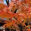休日の港区の朝散歩のおすすめコース。切腹最中@新橋~虎ノ門ヒルズ~愛宕神社