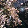 4月4日(水)吉田類大熱演の映画と、最高気温26度の風の強い日。