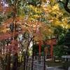 電電宮の紅葉、境内を散策。