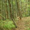 森で絶賛オススメレンズ