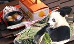 上野動物園でまったりピクニックと599日齢の子パンダシャンシャン♥