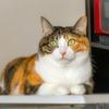 【愛猫日記】毎日アンヌさん#146