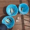 八景島シーパラダイス うみファーム 釣り