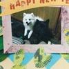 2018明けましたワン!戌年ダヨ〜♪(´ε` )