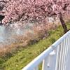 梅?桜?とりあえず綺麗ならOK?