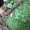 苔の紹介①
