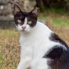 石垣島 サザンゲート公園の野良猫たち