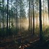 🌙 ゆらぎの森へ