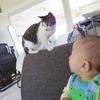 猫と乳児の相性