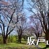 桜満開の南魚沼「坂戸山」へ(薬師尾根コース~城坂コース)