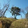 平野谷から鍋蓋山へのハイキング(その2)鍋蓋山~大師道