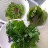 【家庭菜園】本日の収穫報告0616