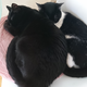 今日の黒猫モモ&白黒猫ナナ