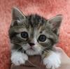 たんまり仔猫ちゃん情報❢❢注目❢