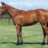 シルク15年産一口初心者全馬評価22 ルシルクの15