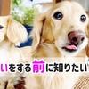 犬の多頭飼いをする前に知りたい11の事