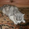 わが家の猫と「独立自尊」と「修身要領」