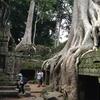 カンボジア シェムリアップ  「タ プローム」遺跡  巨木に浸食された遺跡