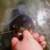 理由なしの有給で行ったブラックバス釣り、のつもりがナマズ。オマケでツバメの巣