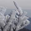 山の雑学~「氷点下」の世界~霜柱・霧氷そしてエビの尻尾
