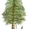 植物の歴史はここから始まった。絶滅した遥か昔の植物たち8選