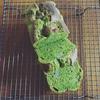くずれ栗と抹茶のパウンドケーキ