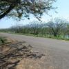 ◆'19/05/03      馬渡の桜『御衣黄』を観に