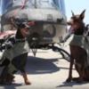 警察犬・軍用犬として最も秀でた犬種【TOP5】