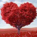 恋をするための心理学Q&A