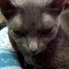 【リンパ腫】1月8日 猫のレストラン公開~  ~3クール目:補足・サプリ&グッズ(1)~