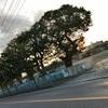 最下級上級会員JMBクリスタルへの道⑨(釜山発券石垣行き弾丸復路編)