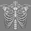 肋骨が硬い人へ!息苦しい原因かも?ストレッチを紹介:胸郭の柔軟性