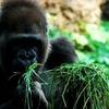 動物園に行ってもつまらない動物ランキングまとめ