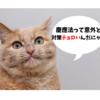 【慶應法学部の英語】この対策で平均点の2倍取って圧勝した!その全貌を公開します