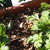 週末のベランダ作業(植物なし)