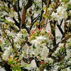 桜と入学式。お籠り生活は自分が楽しめるものを。